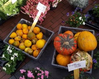 Amstelveen market - fresh pumpkins